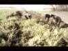 mobile video 01